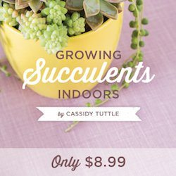 A-guide-to-growing-happy-healthy-succulents-indoors-by-Cassidy-Tuttle-of-Succulents-and-Sunshine
