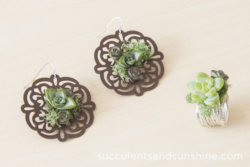 Succulent earrings and ring made by Succulents and Sunshine