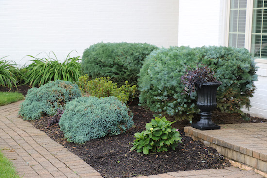 Landscaping AFTER