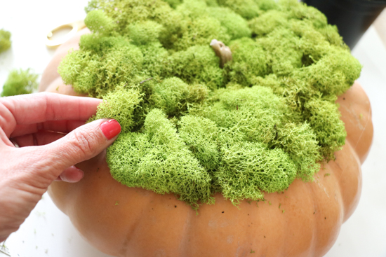 adding-moss-to-pumpkins