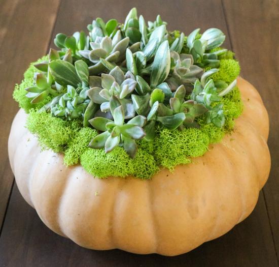 diy-succulent-pumpkin