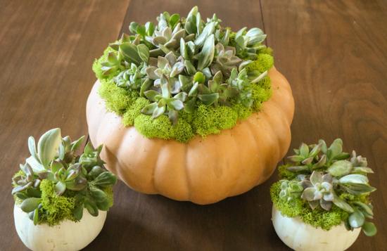 diy-succulent-pumpkins