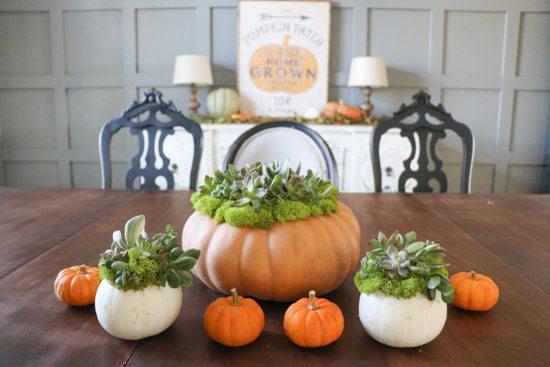 succulent-pumpkins